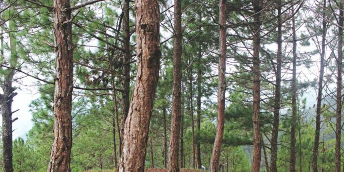 hoților de lemne